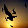 موسسهی یاوران سرزمین آریا به پویش (کمپین) بین المللی حفاظت پرندگان مهاجر پیوست..