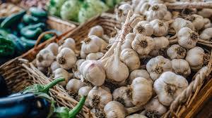 [تقویت دستگاه ایمنی با تغییر نگرش و رفتار همسو با طبیعت و خوراک گیاهی خام و] مصرف سیر  یکی از باید های مبارزه با ویروس کرونا